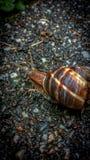 Ενιαίο σαλιγκάρι στο πεζοδρόμιο στοκ εικόνες με δικαίωμα ελεύθερης χρήσης
