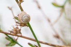 Ενιαίο σαλιγκάρι στη χλόη Στοκ Φωτογραφία