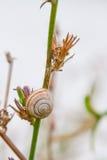 Ενιαίο σαλιγκάρι στη χλόη Στοκ φωτογραφία με δικαίωμα ελεύθερης χρήσης
