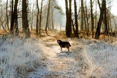 Ενιαίο σκυλί που περιμένει μπροστά στην πορεία που καλύπτεται από τον παγετό Στοκ Εικόνες