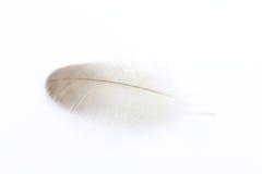 Ενιαίο φτερό παπιών Στοκ Εικόνα