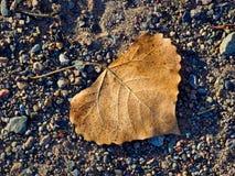 Ενιαίο φύλλο στο αμμοχάλικο στοκ εικόνες