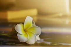 Ενιαίο plumeria ή frangipani λουλουδιών στον εκλεκτής ποιότητας τόνο χρώματος Στοκ Φωτογραφία
