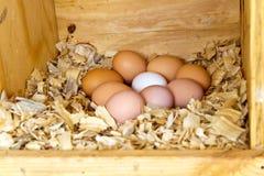 Εννέα αυγά κοτόπουλου Στοκ φωτογραφία με δικαίωμα ελεύθερης χρήσης