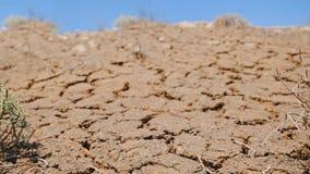 Εννοιολογικό βίντεο της διαβίωσης και των νεκρών εγκαταστάσεων στο πληγε'ν από την ξηρασία έδαφος απόθεμα βίντεο