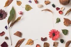 Εννοιολογικό υπόβαθρο φθινοπώρου Στοκ φωτογραφίες με δικαίωμα ελεύθερης χρήσης