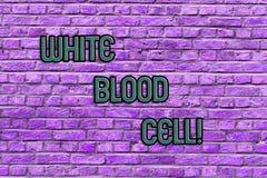 Εννοιολογικό χέρι που γράφει παρουσιάζοντας λευκό κύτταρο αίματος Τα λευκά αιμοσφαίρια κειμένων επιχειρησιακών φωτογραφιών υπεύθυ στοκ εικόνες με δικαίωμα ελεύθερης χρήσης