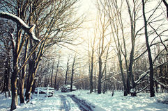 εννοιολογικός χειμώνας πάρκων εικόνας Στοκ φωτογραφίες με δικαίωμα ελεύθερης χρήσης