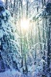 εννοιολογικός χειμώνας πάρκων εικόνας Στοκ Εικόνες