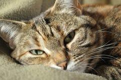 ενοχλημένη γάτα Στοκ φωτογραφία με δικαίωμα ελεύθερης χρήσης
