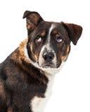 Ενοχλημένα μεγάλα κυλώντας μάτια σκυλιών επάνω στοκ φωτογραφίες
