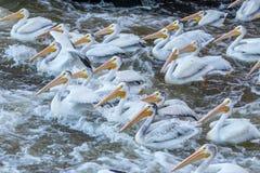 ενοχλημένα ύδατα Στοκ εικόνες με δικαίωμα ελεύθερης χρήσης
