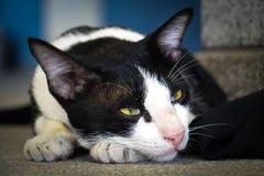 Ενοχλητικές γάτες Στοκ Εικόνες