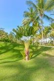 Εντυπωσιακή παραλία παραδείσου στο Itacare Bahia Βραζιλία Στοκ φωτογραφία με δικαίωμα ελεύθερης χρήσης