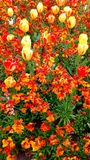 Εντυπωσιακή ρύθμιση λουλουδιών Στοκ εικόνα με δικαίωμα ελεύθερης χρήσης