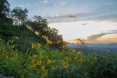 Εντυπωσιακό τοπίο κατά τη διάρκεια του ηλιοβασιλέματος από την άποψη Kiew Lom, περιοχές Mapa πόνων, γιος της Mae Hong, βόρεια Ταϊ στοκ φωτογραφία με δικαίωμα ελεύθερης χρήσης