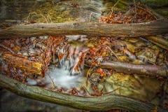 Εντύπωση φθινοπώρου Στοκ Εικόνες