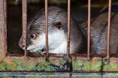 Ενυδρίδα σε ένα κλουβί Στοκ φωτογραφία με δικαίωμα ελεύθερης χρήσης