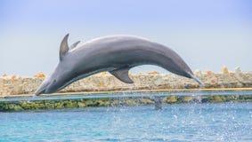 Ενυδρείο θάλασσας του Κουρασάο και ακαδημία δελφινιών Στοκ Φωτογραφία