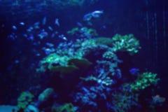 Ενυδρείο με τα ψάρια, που θολώνεται για το υπόβαθρο Στοκ εικόνα με δικαίωμα ελεύθερης χρήσης