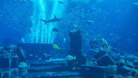 Ενυδρείο που γεμίζουν τεράστιο με τα ψάρια Στοκ Φωτογραφία