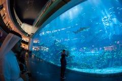 Ενυδρείο του Ντουμπάι και κάτω από το ζωολογικό κήπο νερού στοκ φωτογραφίες
