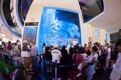 Ενυδρείο του Ντουμπάι και κάτω από το ζωολογικό κήπο νερού στοκ εικόνα