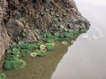 ενυδρείο anemone καμία ληφθείσα θάλασσα άγρια περιοχή Στοκ φωτογραφίες με δικαίωμα ελεύθερης χρήσης