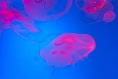 ενυδρείο anemone καμία ληφθείσα θάλασσα άγρια περιοχή Στοκ Φωτογραφία