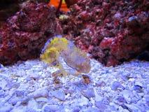 Ενυδρείο seahorse Στοκ Εικόνα