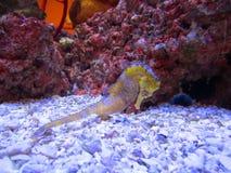 Ενυδρείο seahorse Στοκ φωτογραφία με δικαίωμα ελεύθερης χρήσης