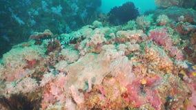 Ενωμένο φίδι θάλασσας φιλμ μικρού μήκους