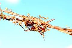 Ενότητα των μυρμηγκιών Στοκ εικόνες με δικαίωμα ελεύθερης χρήσης