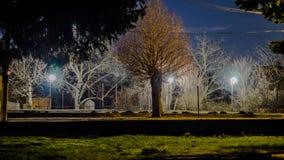 Ενδιαφέρον δέντρο κοντά στο δρόμο κατά τη διάρκεια της νύχτας Στοκ Εικόνες