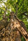 Ενδιαφέρον δέντρο Στοκ φωτογραφία με δικαίωμα ελεύθερης χρήσης