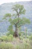 Ενδιαφέρον δέντρο Στοκ Εικόνες
