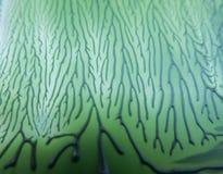 Ενδιαφέρον πράσινο υπόβαθρο σύστασης με τις γραμμές και στοκ φωτογραφίες