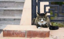 Ενδιαφέρουσα άστεγη γάτα Στοκ εικόνες με δικαίωμα ελεύθερης χρήσης