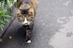 Ενδιαφέρουσα άστεγη γάτα Στοκ φωτογραφία με δικαίωμα ελεύθερης χρήσης