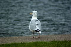 Εξέταση αυτό που είναι γύρω Στοκ φωτογραφία με δικαίωμα ελεύθερης χρήσης