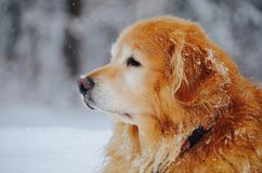 Εξέταση τον κόσμο μέσω του ματιού του σκυλιού σας το χειμώνα Στοκ Εικόνες