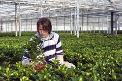 Εξέταση των σε δοχείο φυτών Στοκ εικόνα με δικαίωμα ελεύθερης χρήσης