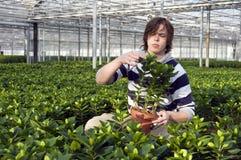 Εξέταση των σε δοχείο φυτών Στοκ Φωτογραφίες