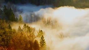 Εξαιρετικά υψηλός κινηματογράφος χρονικού σφάλματος καθορισμού 4k της παχιάς κυλώντας ομίχλης πέρα από το στριμμένο ποταμό από τη φιλμ μικρού μήκους