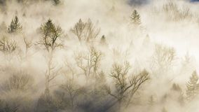 Εξαιρετικά υψηλός κινηματογράφος χρονικού σφάλματος καθορισμού 4k της παχιάς κυλώντας ομίχλης πέρα από το στριμμένο ποταμό κοντά  φιλμ μικρού μήκους