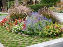 Εξαιρετικό κρεβάτι λουλουδιών Στοκ εικόνες με δικαίωμα ελεύθερης χρήσης