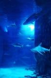 Δεξαμενή καρχαριών Στοκ εικόνες με δικαίωμα ελεύθερης χρήσης