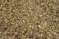 Εξασθενίστε τα πεσμένα φύλλα που καλύπτουν το έδαφος στοκ εικόνα με δικαίωμα ελεύθερης χρήσης