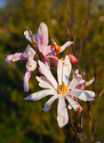 εξασθενίστε το λουλούδι στοκ εικόνες με δικαίωμα ελεύθερης χρήσης