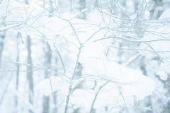 Εξασθενισμένος, αποκορεσμένος & χαμήλωσε το υπόβαθρο ενός δέντρου κλάδων που καλύφθηκε στο χιόνι σε μια χιονώδη δασική σκηνή στοκ φωτογραφία με δικαίωμα ελεύθερης χρήσης
